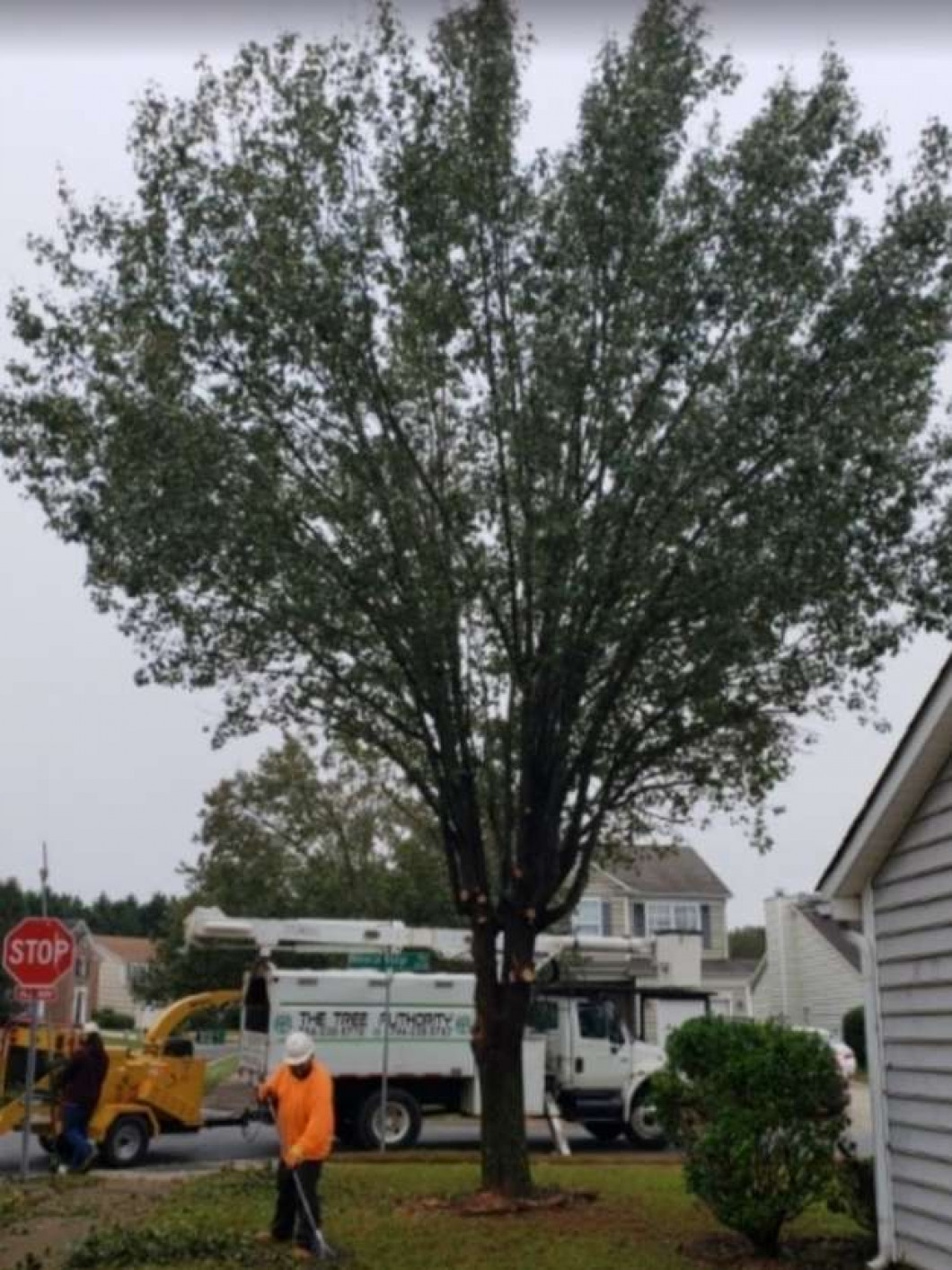 tree trimming service charlotte nc